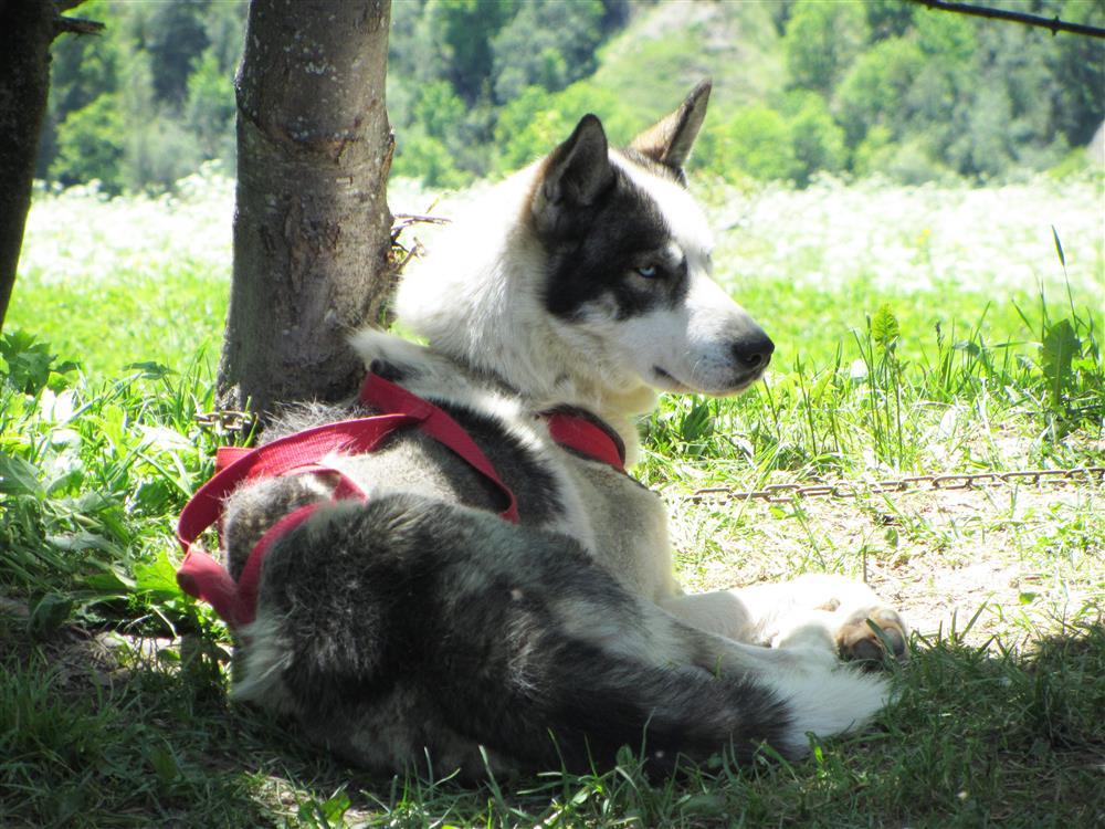 Wandelen met honden © White forest