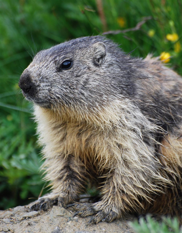 petit dej face aux marmottes © arvan vtt montagne