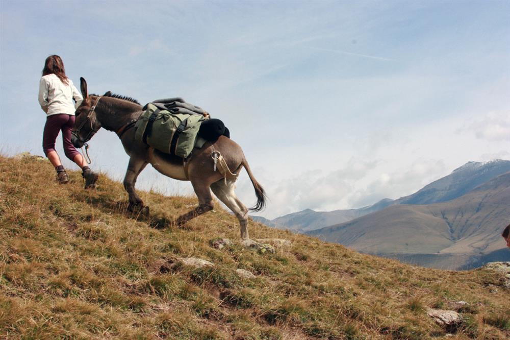 Wandeling met  pakezels door de alpenweides © Anes en montagne