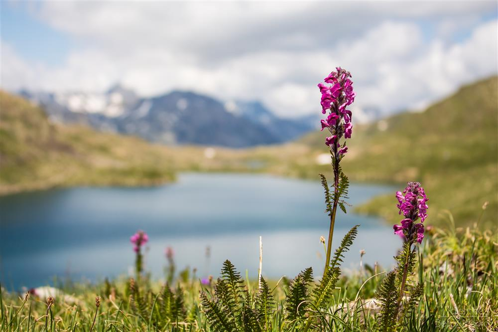 Circuit of the Three Lakes to the foot of the Glacier © Valentine BM photographie