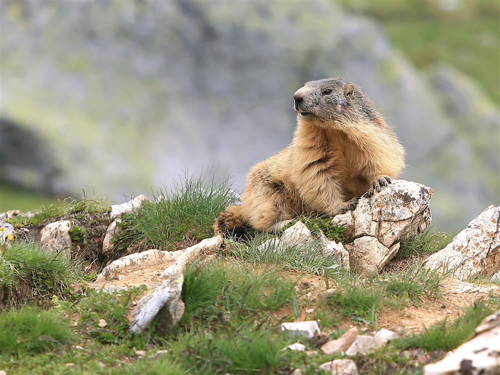 Sortie Marmottes © Bureau Montagne des Arves