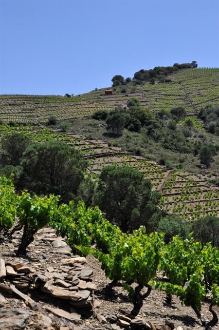 Visite du vignoble et des chais du Domaine Tambour