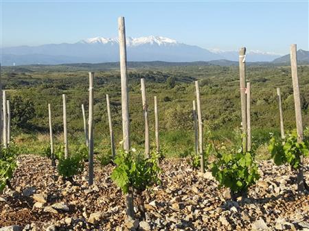Enquête découverte sur une journée, des différents terroirs des vignobles catalans