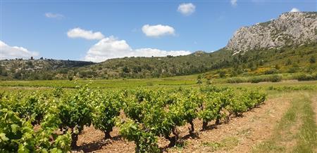 Découverte des vignobles autour de Rivesaltes sur la demi-journée