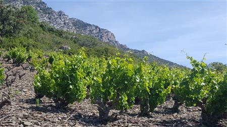 Balades découvertes des vignobles des Corbières sur la journée