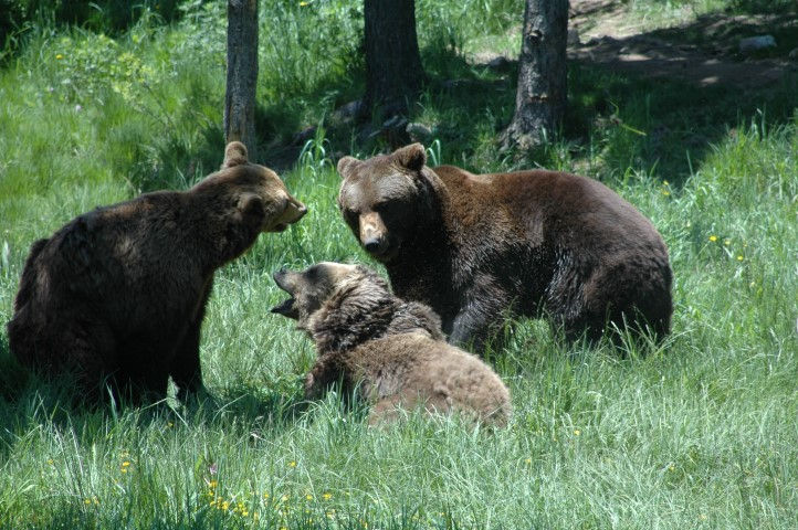 Ours © Parc animalier des Angles